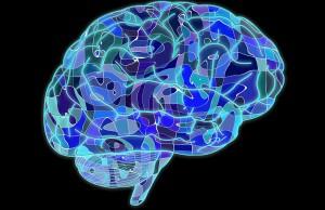 Entender la manera en que el cerebro experimenta las marcas es clave para el marketing.