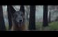 Esta campaña nos dice que la mascota es parte de la familia.